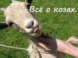 Всё о козах