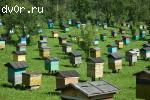 Продаю пчелопакеты 2013