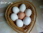 Продаю ДЕРЕВЕНСКИЕ КУРИНЫЕ ЯЙЦА