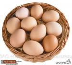 яйца оптом