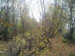 Продаю участок под пасеку в Рязанской области с возможностью строить дом.
