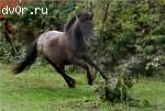 Пони-аппалуза