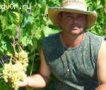 саженцы и черенки винограда почтой по вс