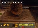 Инкубационные яйца перепелки