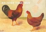 Карликовый вельзумер КУПЛЮ НА РАЗВОД ИЛИ КУРОЧЕК И ПЕТУШКА ИЛИ ЯЙЦА!