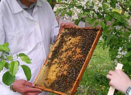 Как сделать райских пчёл