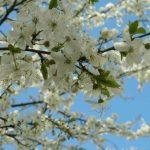 Уход за яблоней весной: чем подкормить и как омолодить дерево