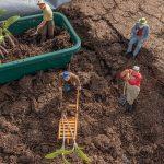 Что посадить под зиму в огороде: овощи и зелень для ранних урожаев