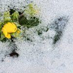 Осенний уход за цветущими многолетниками: какие из них нельзя обрезать на зиму